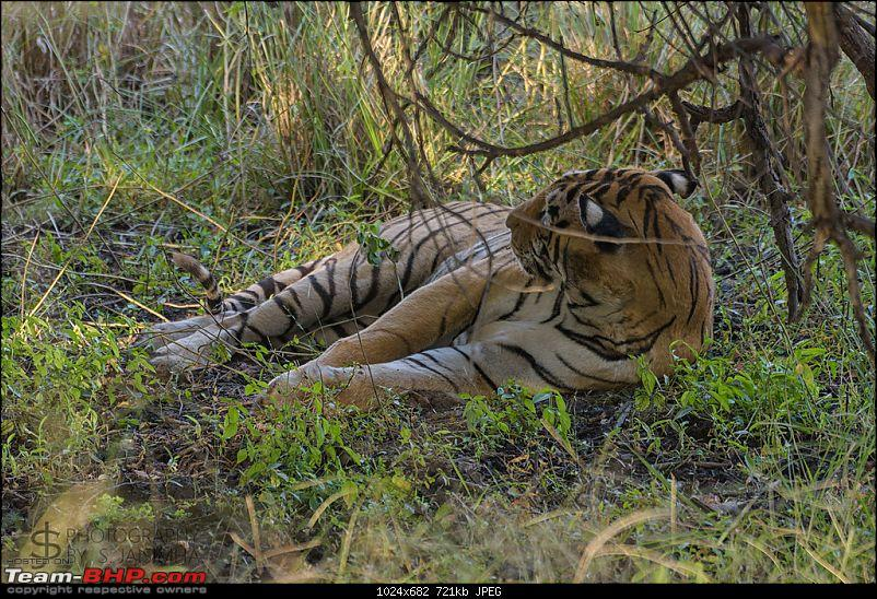Ranthambore - Land of Tigers and more-rtmb5337.jpg