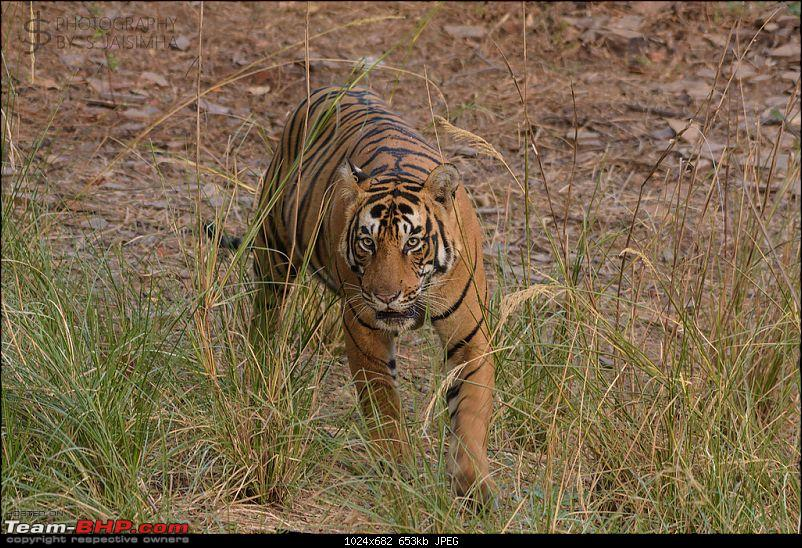 Ranthambore - Land of Tigers and more-rtmb5842.jpg