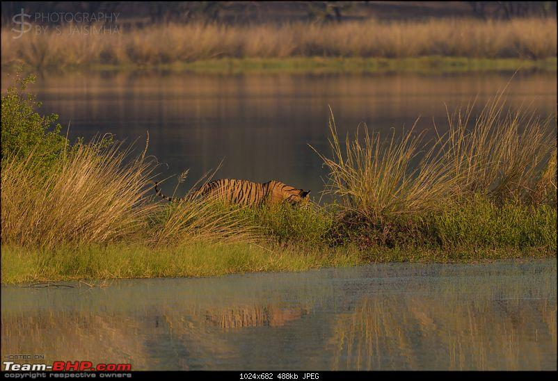 Ranthambore - Land of Tigers and more-rtmb6023.jpg