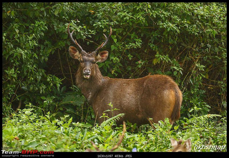 Photologue: Wildlife at Kabini-img_3059.jpg