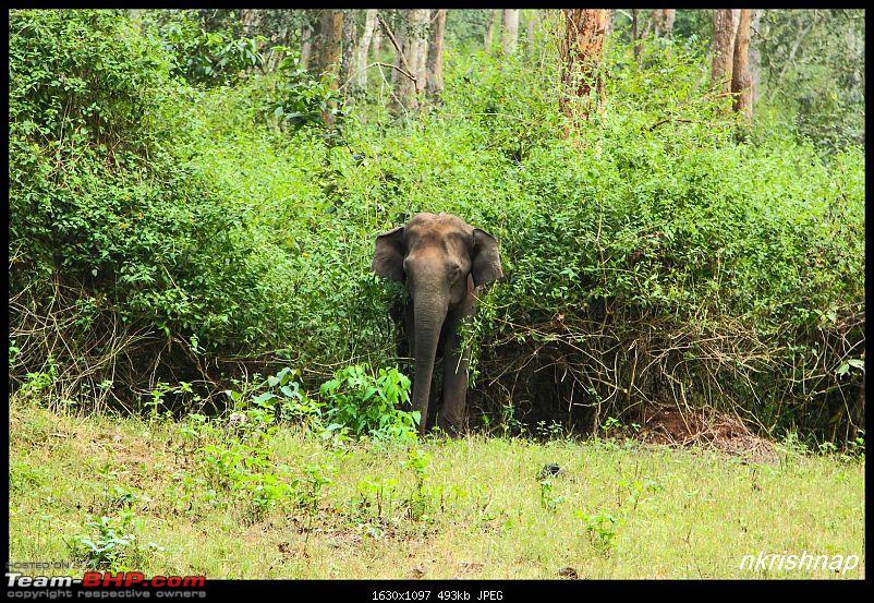 Photologue: Wildlife at Kabini-img_7925.jpg