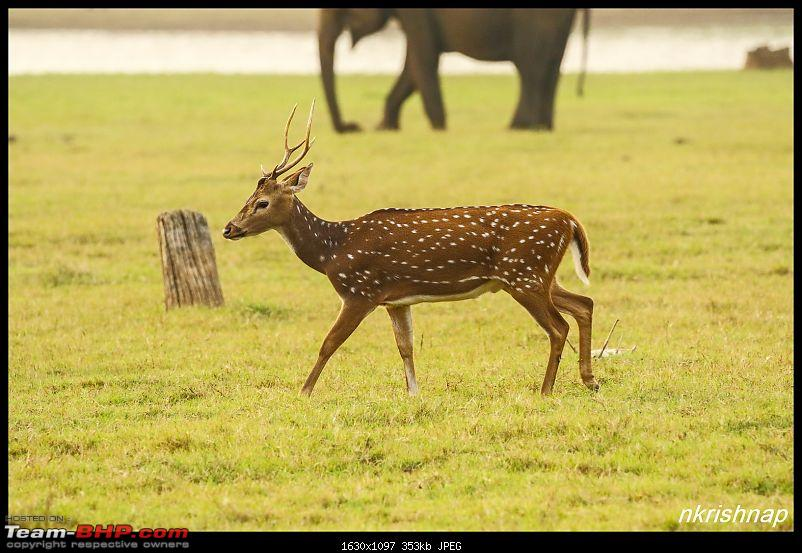 Photologue: Wildlife at Kabini-img_3407.jpg