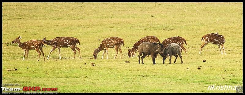 Photologue: Wildlife at Kabini-img_3190.jpg