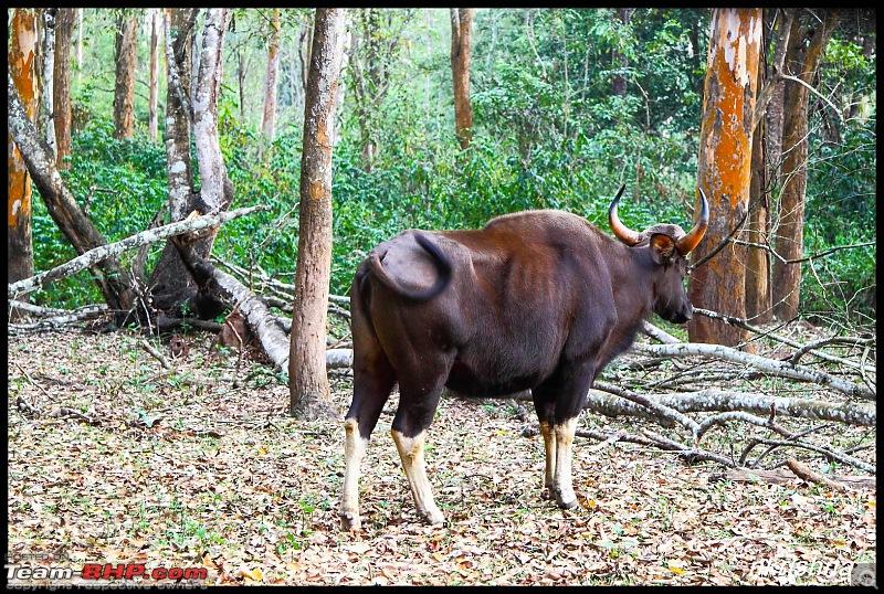 Photologue: Wildlife at Kabini-img_7944.jpg