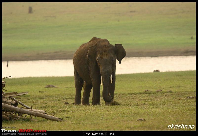 Photologue: Wildlife at Kabini-img_3359.jpg