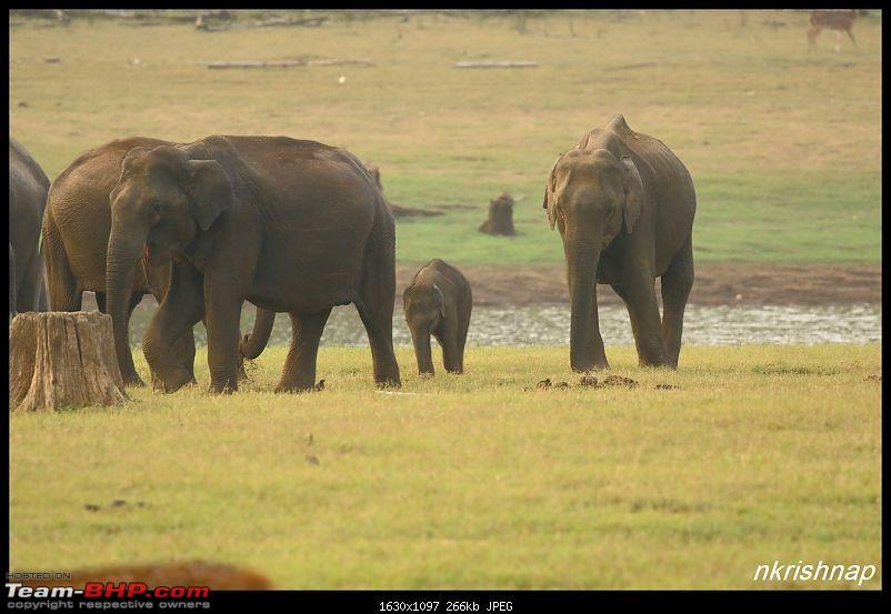 Photologue: Wildlife at Kabini-img_3393.jpg