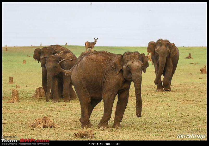 Photologue: Wildlife at Kabini-img_3508.jpg