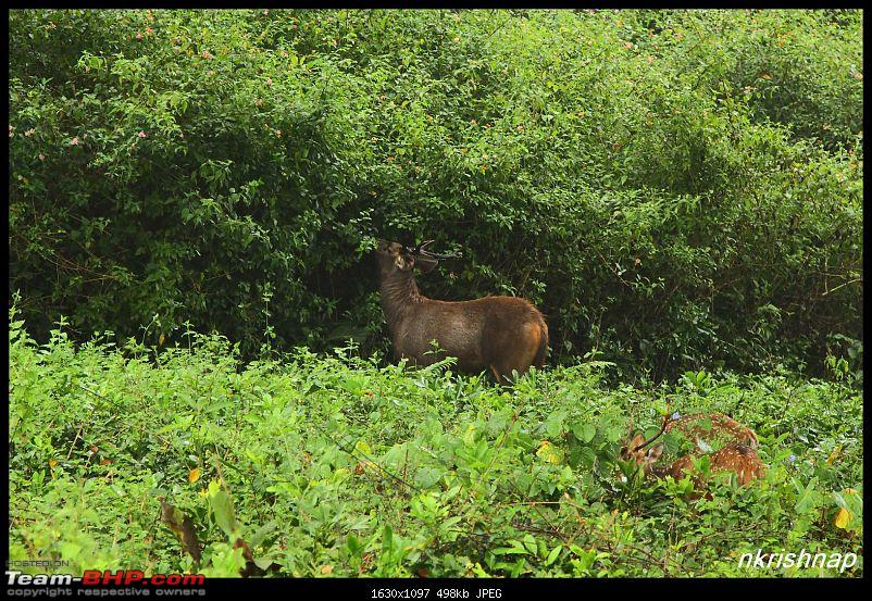 Photologue: Wildlife at Kabini-img_7876.jpg