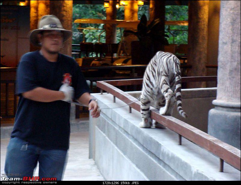 10 days across Thailand (2009) - and 8 more days (2011)-tiger-cnxpty-1k150.jpg