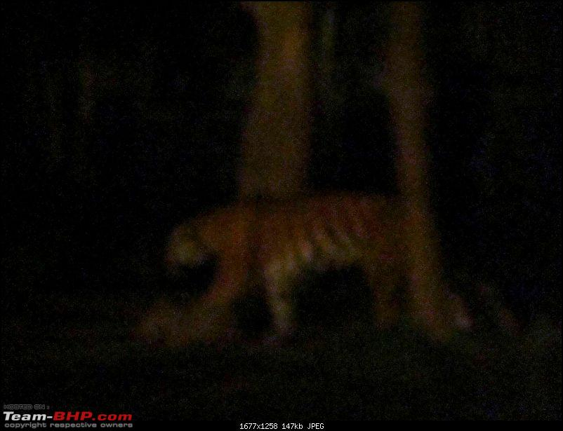 10 days across Thailand (2009) - and 8 more days (2011)-tiger-cnxpty-3k150.jpg