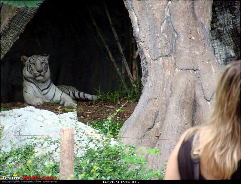 10 days across Thailand (2009) - and 8 more days (2011)-tiger-cnxpty-5k150.jpg