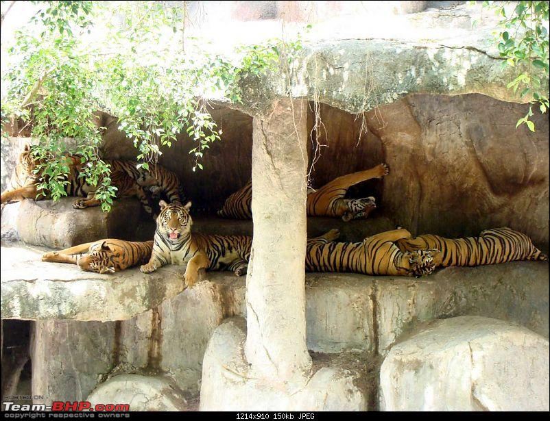10 days across Thailand (2009) - and 8 more days (2011)-tiger-cnxpty-24k150.jpg