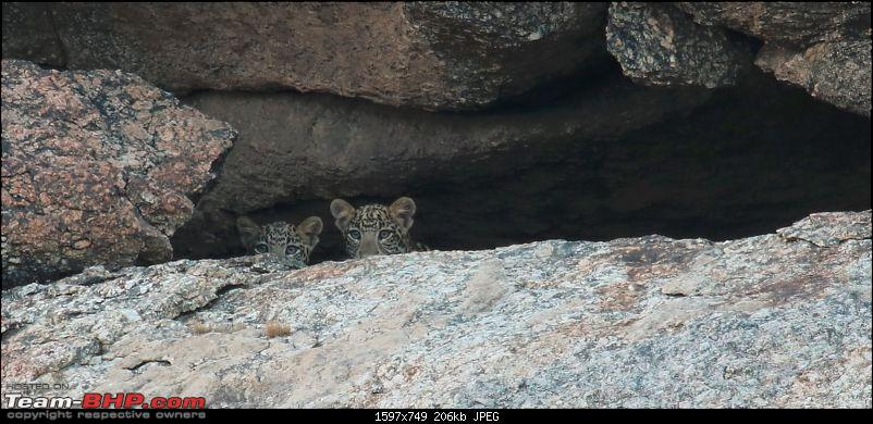 Wayanad: 100 meters away from the most elusive cat in the world – the Leopard!-capture5.jpg