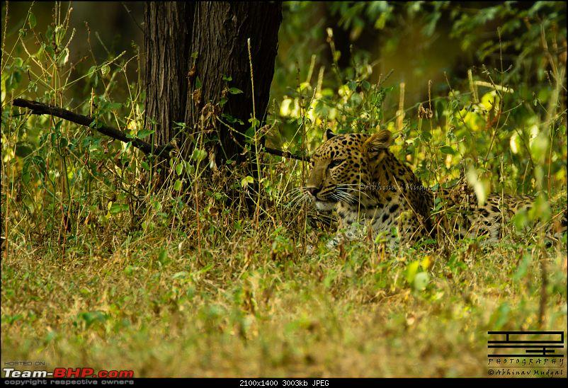 Rambling in the wild : Ranthambore, Jhalana, Bharatpur & more-avi_9043.jpg