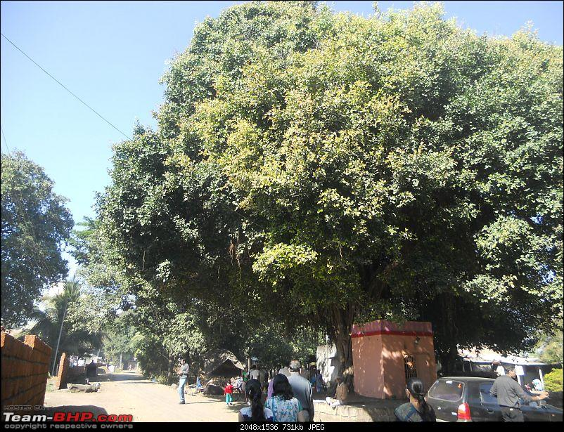 A day-trip: Baramotichi Vihir, Kaas Lake & Shivsagar Lake, Bamnoli-huge-banyan-tree-front-well.jpg