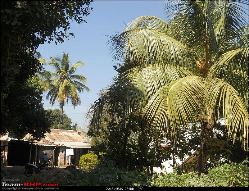 A day-trip: Baramotichi Vihir, Kaas Lake & Shivsagar Lake, Bamnoli-28-house-some-coconut-trees.jpg
