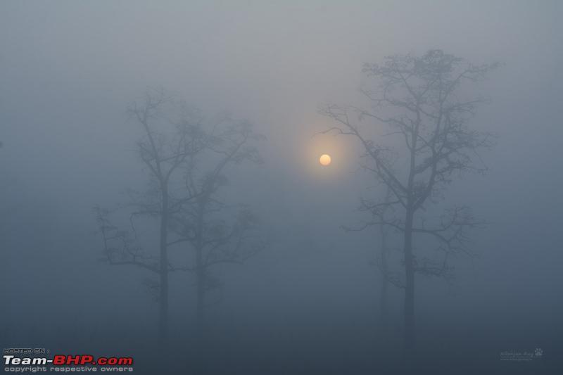 Name:  Mistysunrise_grassland.jpg Views: 13710 Size:  73.7 KB