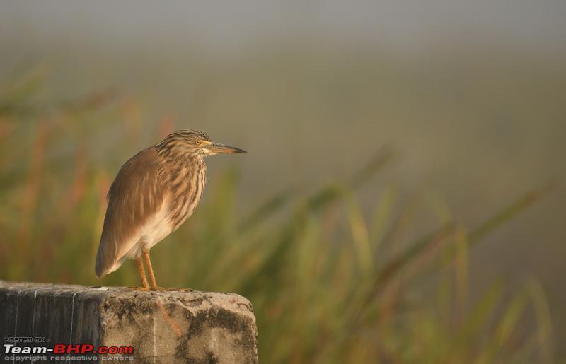 Name:  Heron_morning.jpg Views: 12710 Size:  118.0 KB