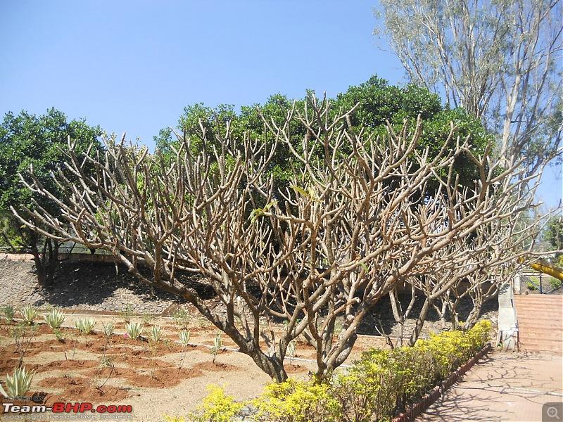 Coastal areas of Ratnagiri: A 4-day driving holiday-dscn6548.jpg