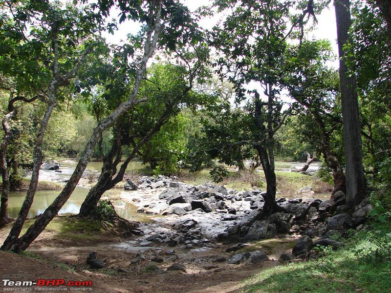 Name:  Wayanad 071.JPG