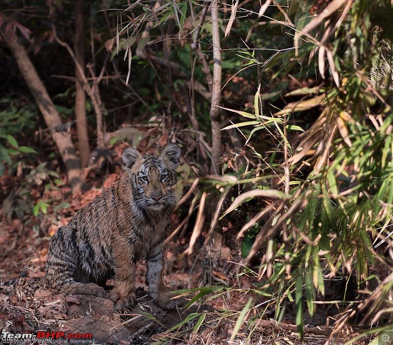 Tadoba Wilderness!-kuhani-cub.jpg