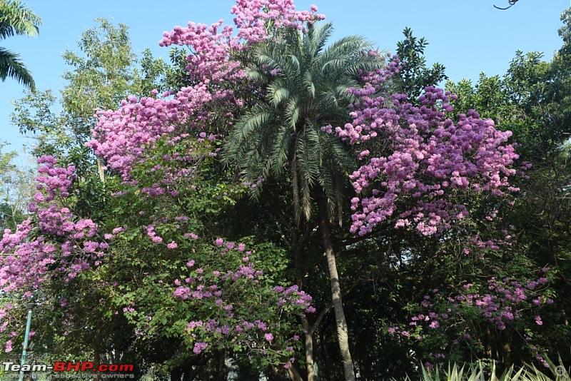 Road-trip: Bangalore -> Bandipur -> Gudalur-dsc_0493.jpg