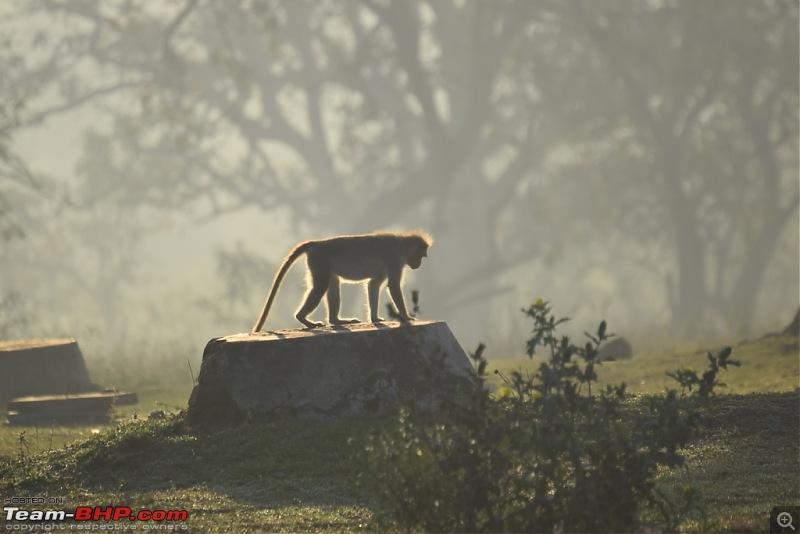 Road-trip: Bangalore -> Bandipur -> Gudalur-dsc_0866.jpg