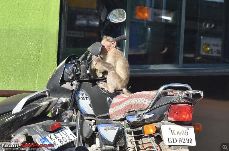 Road-trip: Bangalore -> Bandipur -> Gudalur-monkey-seeing-rvm.jpg