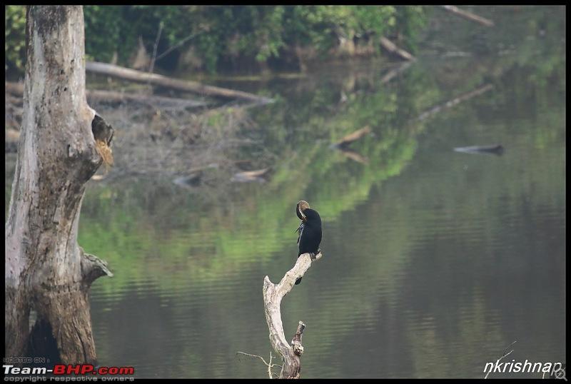 Wildlife Photologue: Nagarhole-img_3711.jpg