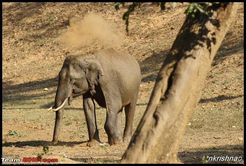 Wildlife Photologue: Nagarhole-img_3843.jpg