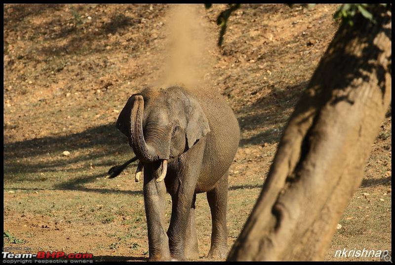 Wildlife Photologue: Nagarhole-img_3882.jpg