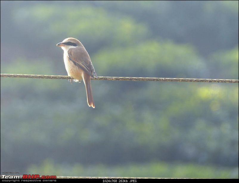 Pun-toured: The beautiful Western Ghats revisited-p1060725.jpg