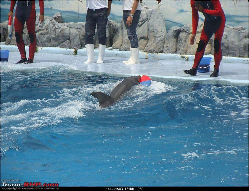 10 days across Thailand (2009) - and 8 more days (2011)-dolphinshow-3.jpg