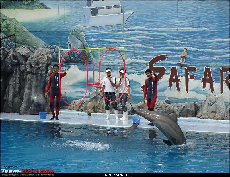 10 days across Thailand (2009) - and 8 more days (2011)-dolphinshow-18.jpg