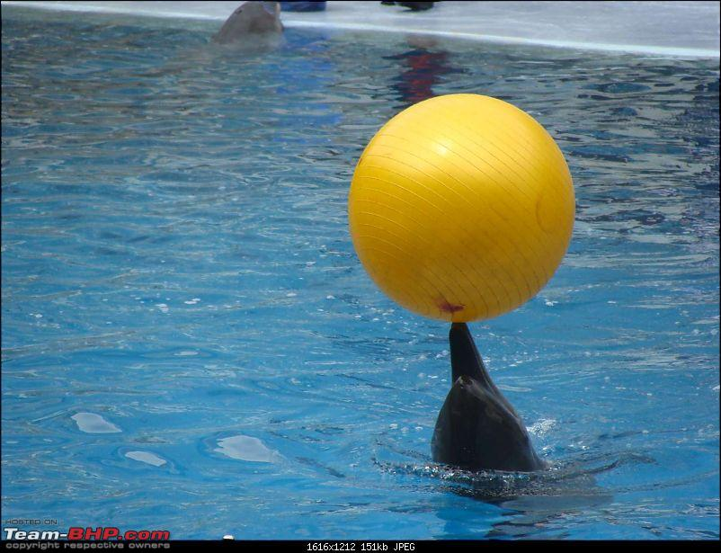 10 days across Thailand (2009) - and 8 more days (2011)-dolphinshow-21.jpg