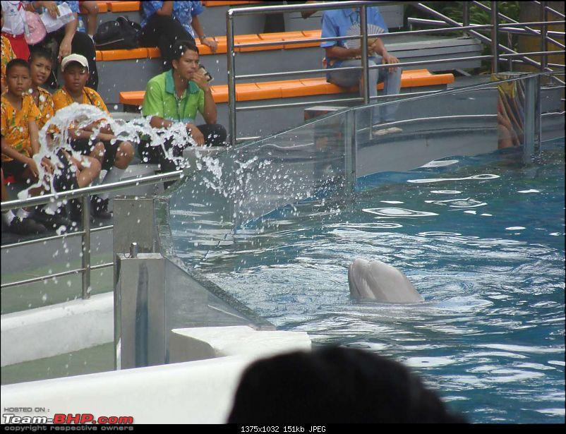 10 days across Thailand (2009) - and 8 more days (2011)-dolphinshow-32.jpg