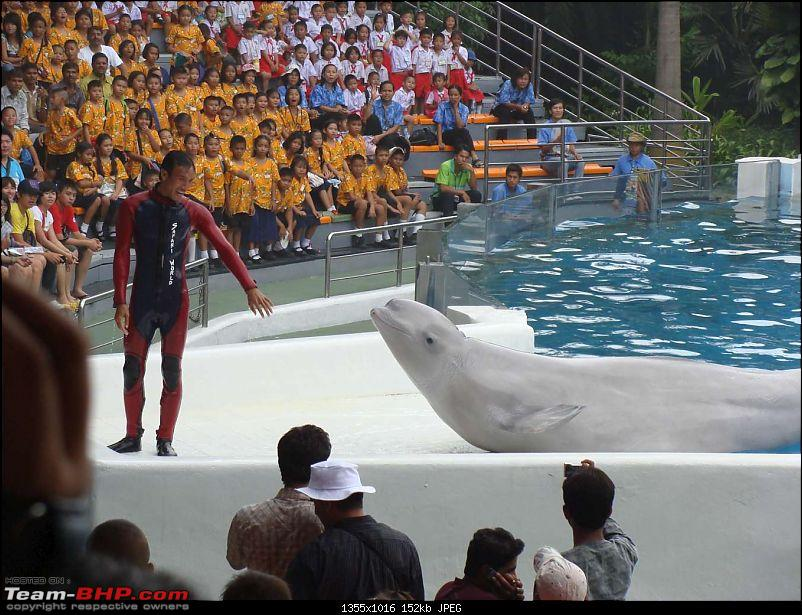 10 days across Thailand (2009) - and 8 more days (2011)-dolphinshow-37.jpg
