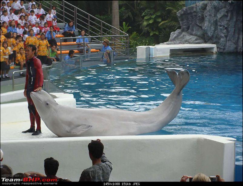 10 days across Thailand (2009) - and 8 more days (2011)-dolphinshow-38.jpg