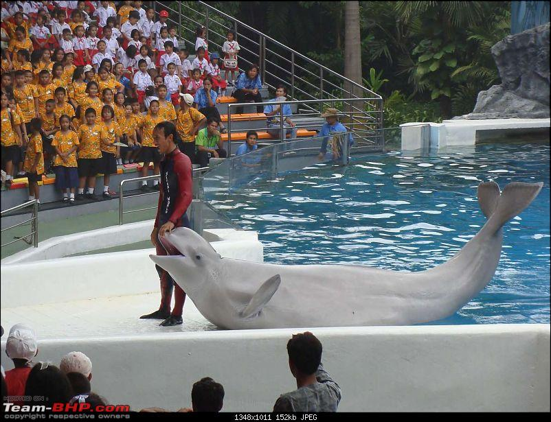 10 days across Thailand (2009) - and 8 more days (2011)-dolphinshow-39.jpg