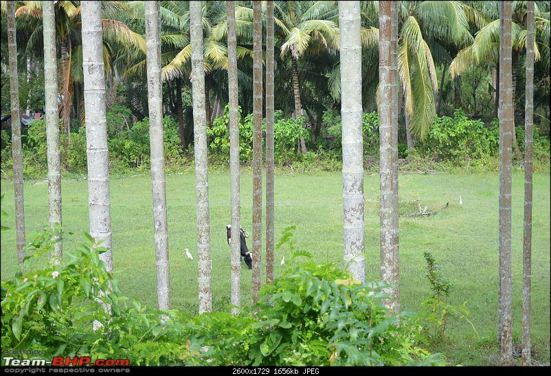 The Andaman Islands – Simply Irresistible-dsc_0391.jpg