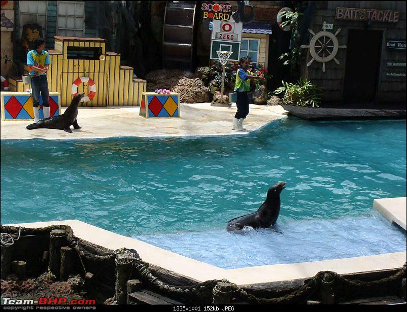 10 days across Thailand (2009) - and 8 more days (2011)-sealion-29.jpg