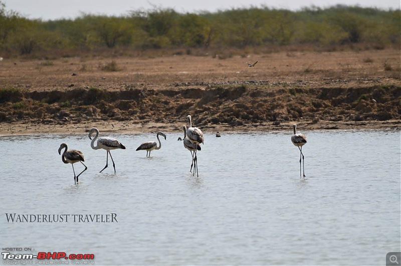 Wanderlust Traveller: Bangalore to the western frontier - White Rann, Vigakot, Lakhpat & Dholavira-suh_8905.jpg