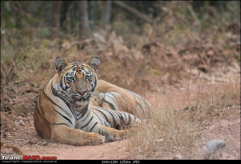 Tadoba Wilderness!-shivanzhari-low-light.jpg