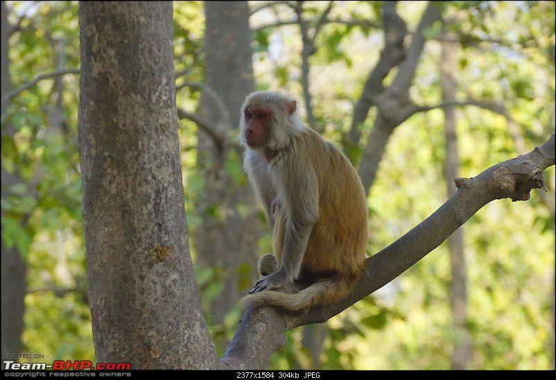 Hawk-On-Fours® (H-4®) Roadtrip: Rajaji National Park, Chilla | A short vacation & an angry elephant-rajajiafternoon-21.jpg