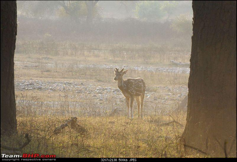 Hawk-On-Fours® (H-4®) Roadtrip: Rajaji National Park, Chilla | A short vacation & an angry elephant-rajajiafternoon-22.jpg
