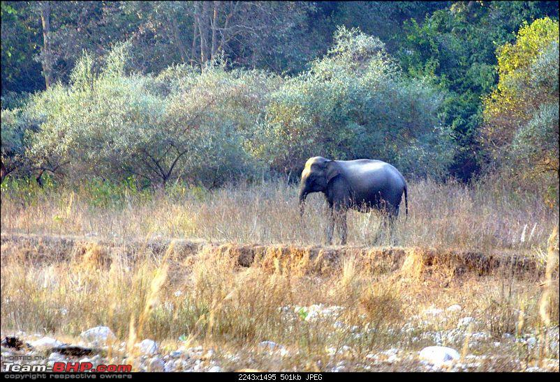 Hawk-On-Fours® (H-4®) Roadtrip: Rajaji National Park, Chilla | A short vacation & an angry elephant-rajajiafternoon-15.jpg
