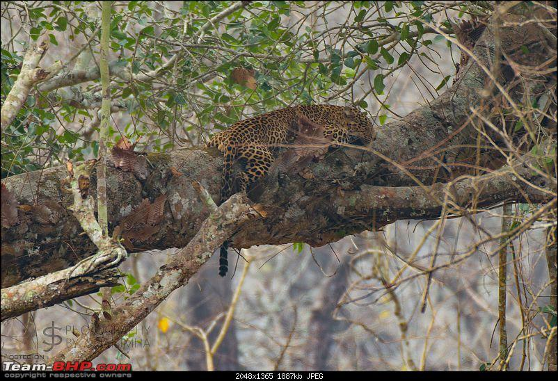 Kabini never disappoints! Four safaris, seven sightings-kbnfeb17043.jpg