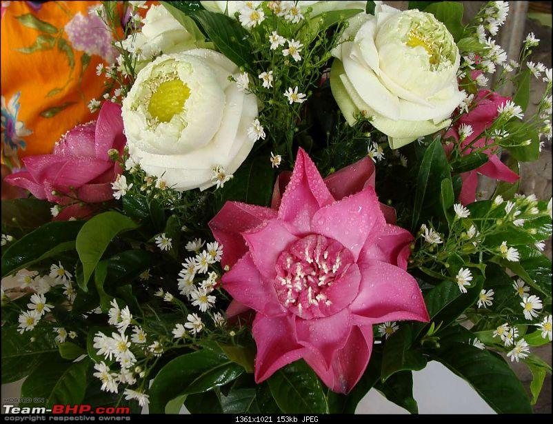 10 days across Thailand (2009) - and 8 more days (2011)-flowers-1.jpg