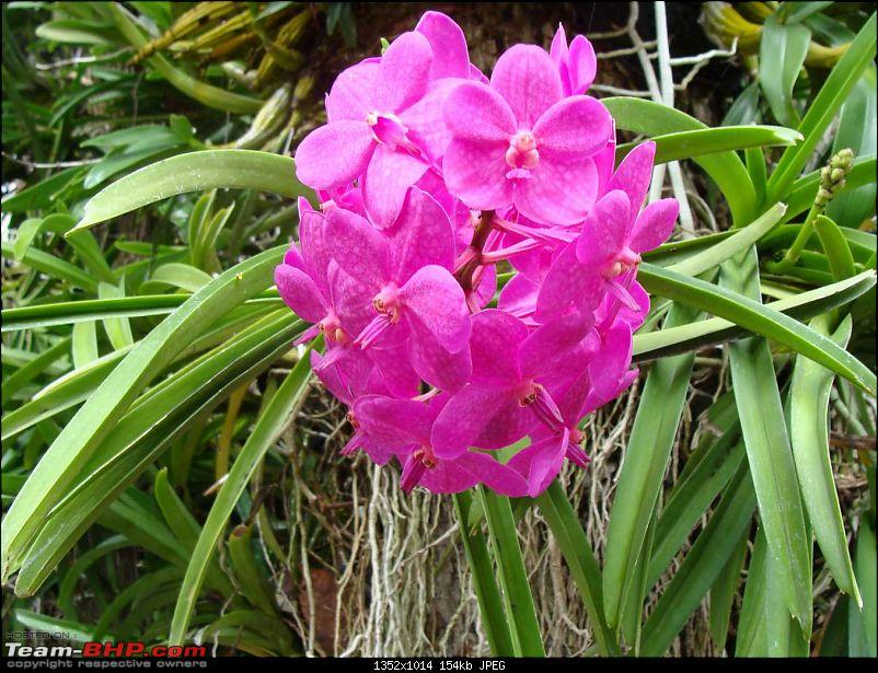 10 days across Thailand (2009) - and 8 more days (2011)-flowers-3.jpg