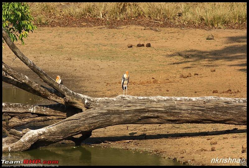 Jungle Retreat Wayanad and Nagarhole yet again!-img_5736.jpg